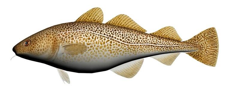 Fladen Cuddly Fish Cushion Cod