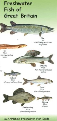 Freshwater Fish of Great Britain
