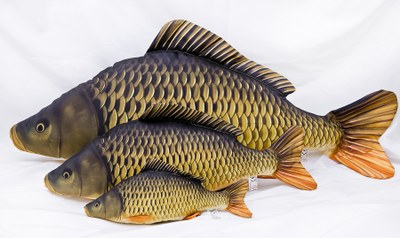 Gaby Giant Common Carp 100cm