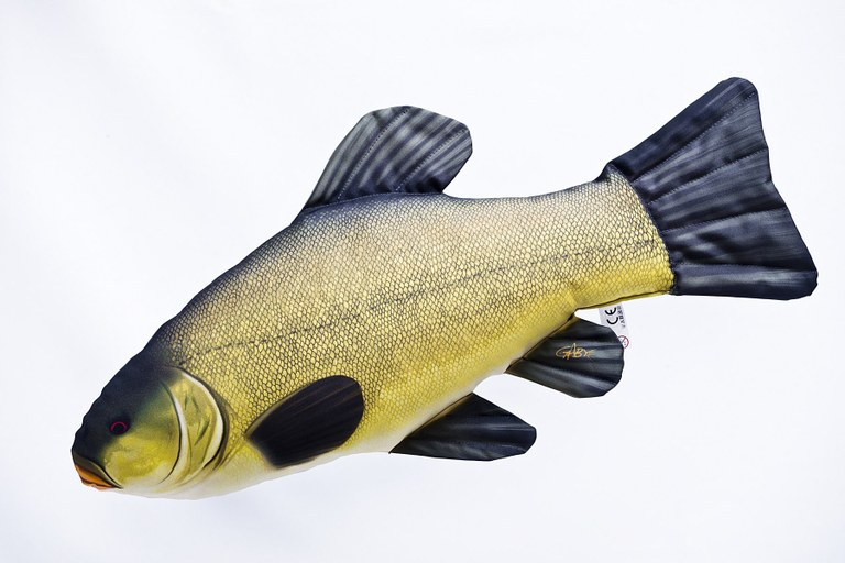 Tench 60cm cushion pillow toy